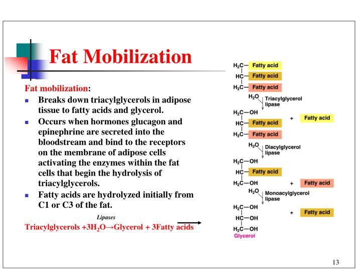 Fat Mobilization