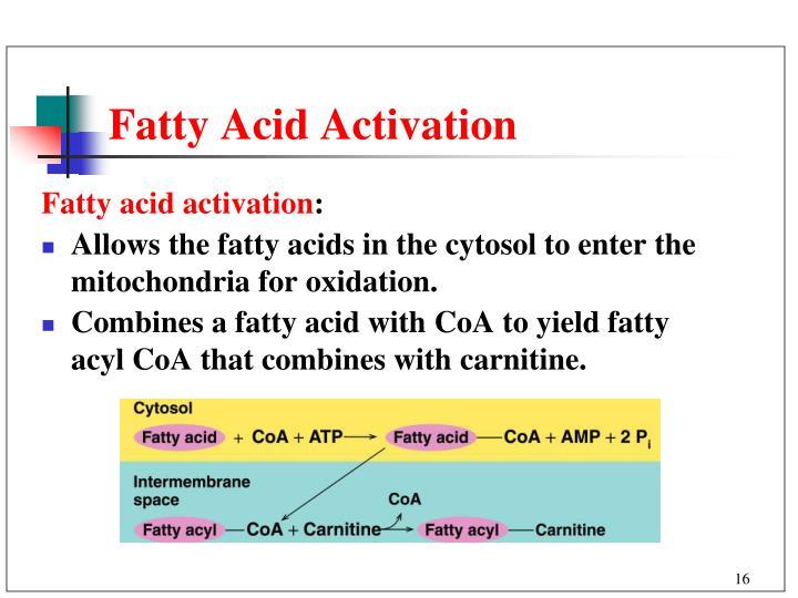 Fatty Acid Activation