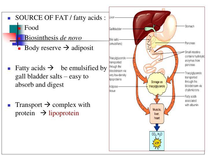 SOURCE OF FAT / fatty acids