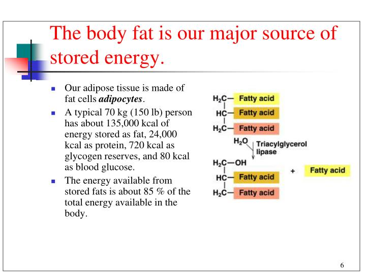 The body fat is our major source of stored energy.