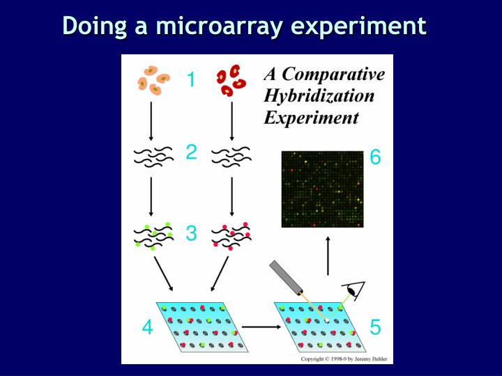 Doing a microarray experiment