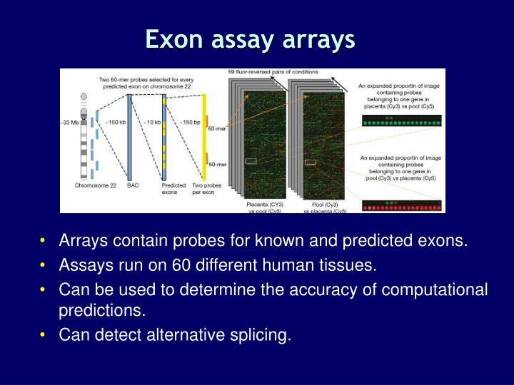 Exon assay arrays
