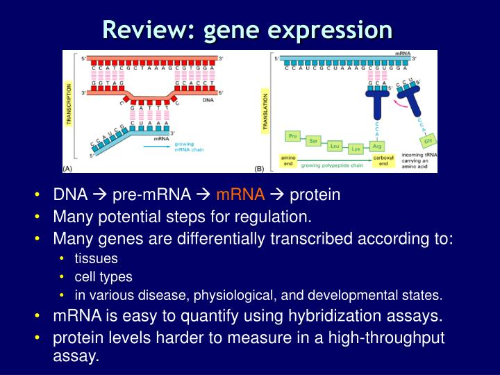 Review: gene expression
