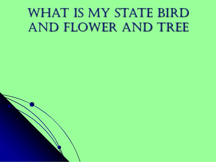 What is my state bird and flower and tree