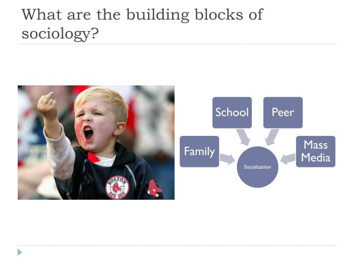 What are the building blocks of sociology?