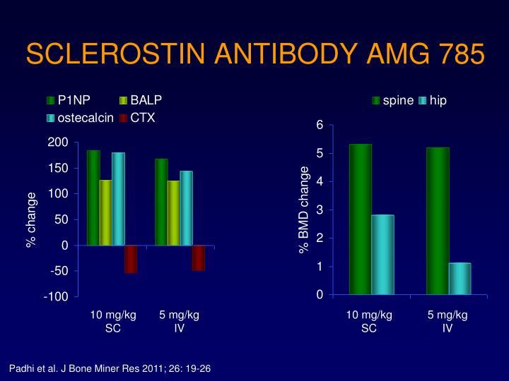 SCLEROSTIN ANTIBODY AMG 785