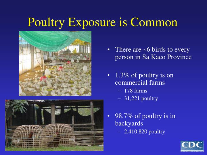 Poultry Exposure is Common