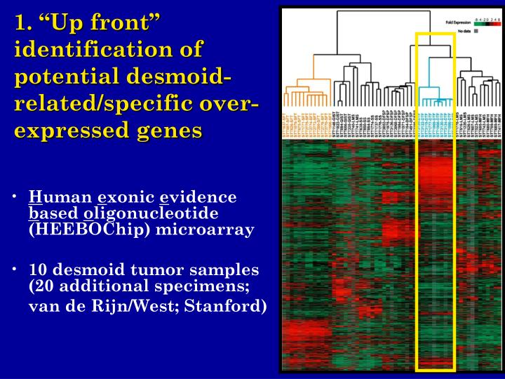 """1. """"Up front"""" identification of potential desmoid-related/specific over-expressed genes"""