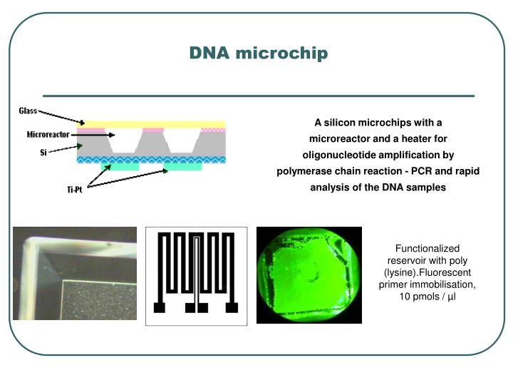 DNA microchip