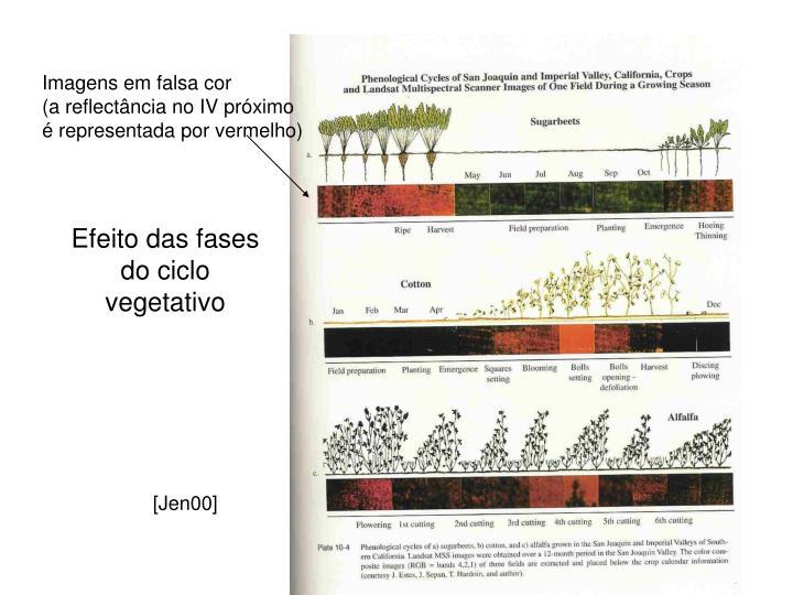 Efeito das fases do ciclo vegetativo