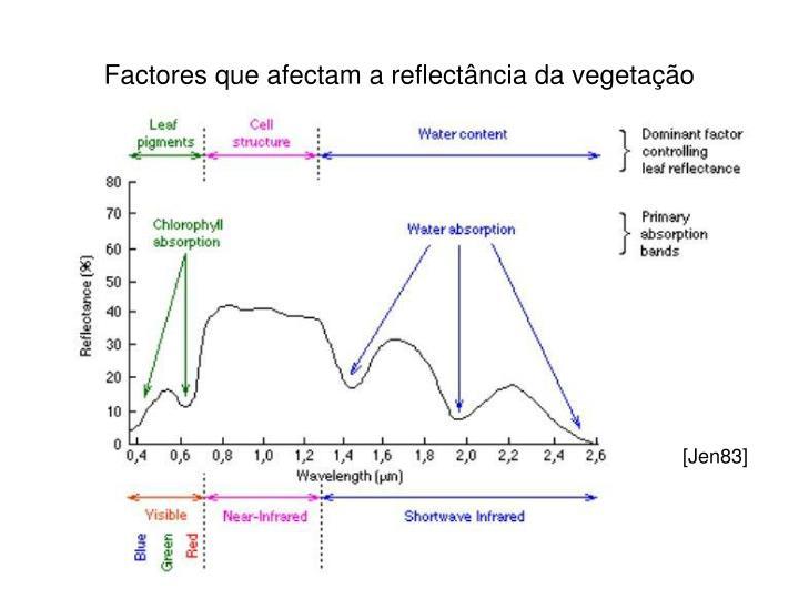 Factores que afectam a reflectância da vegetação