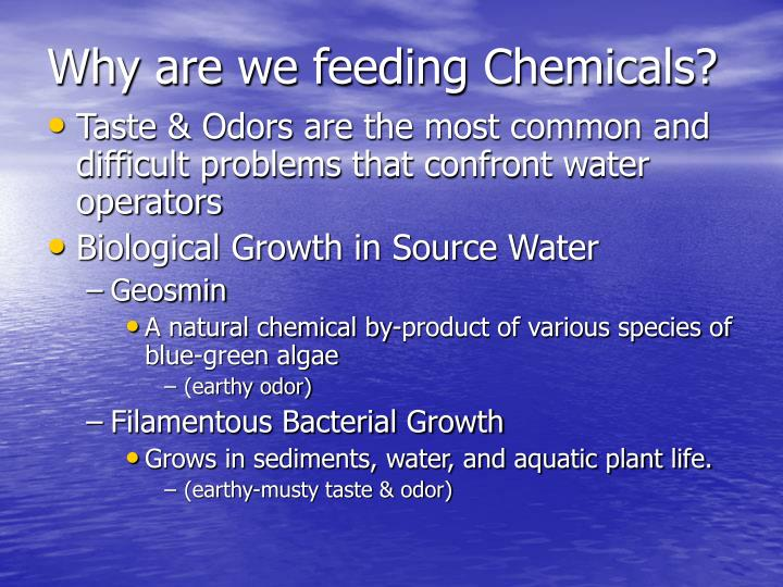 Why are we feeding Chemicals?