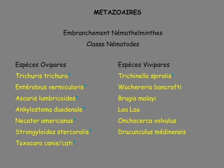 METAZOAIRES