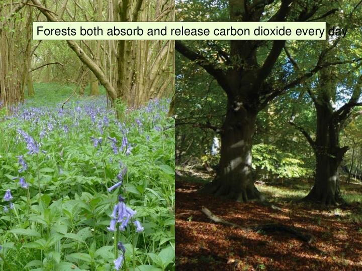 Forests both absorb and release carbon dioxide every day