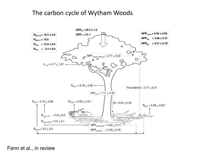 The carbon cycle of Wytham Woods
