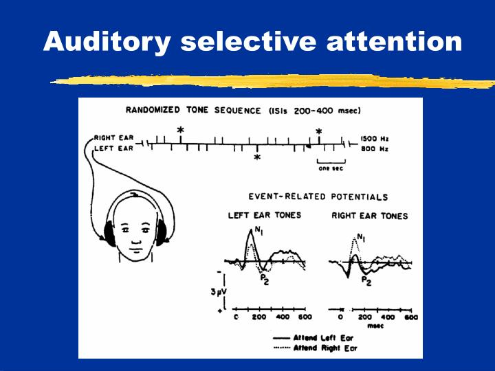 Auditory selective attention
