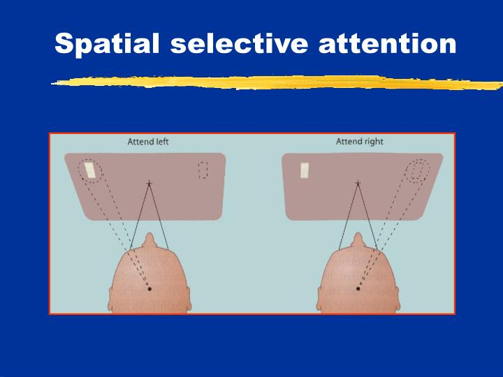 Spatial selective attention