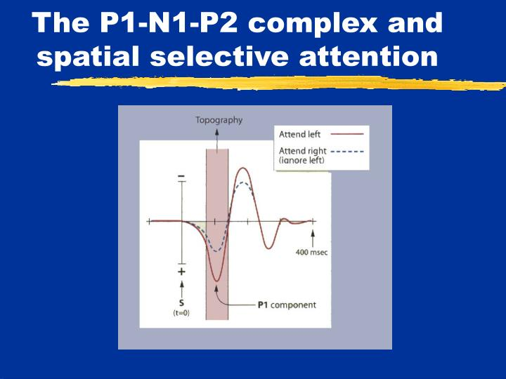 The P1-N1-P2 complex and spatial selective attention