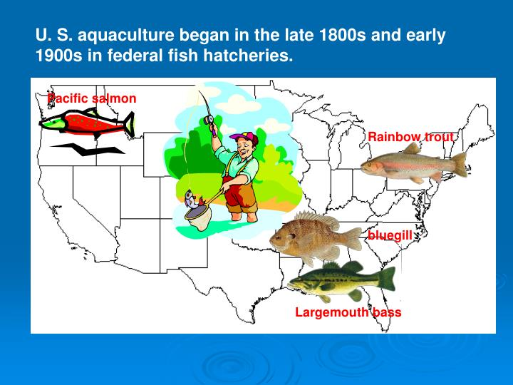 U. S. aquaculture began in the late 1800s and early 1900s in federal fish hatcheries.