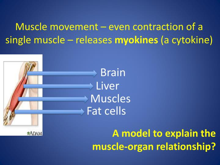 Muscle movement – even contraction of a single muscle – releases