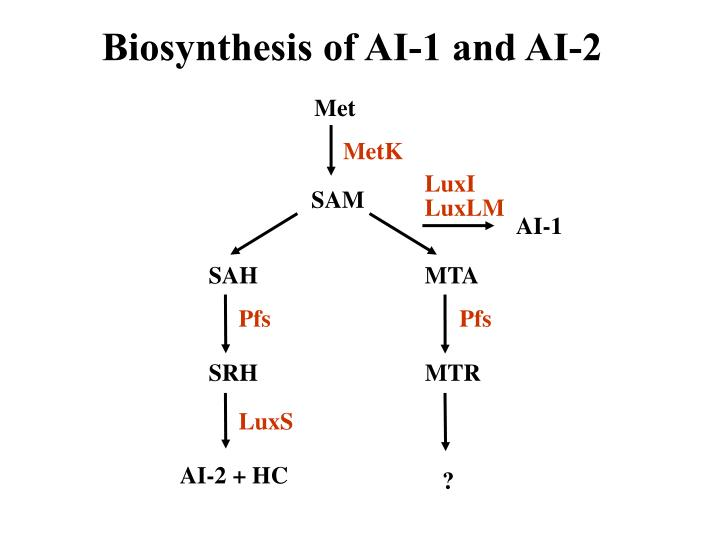 Biosynthesis of AI-1 and AI-2