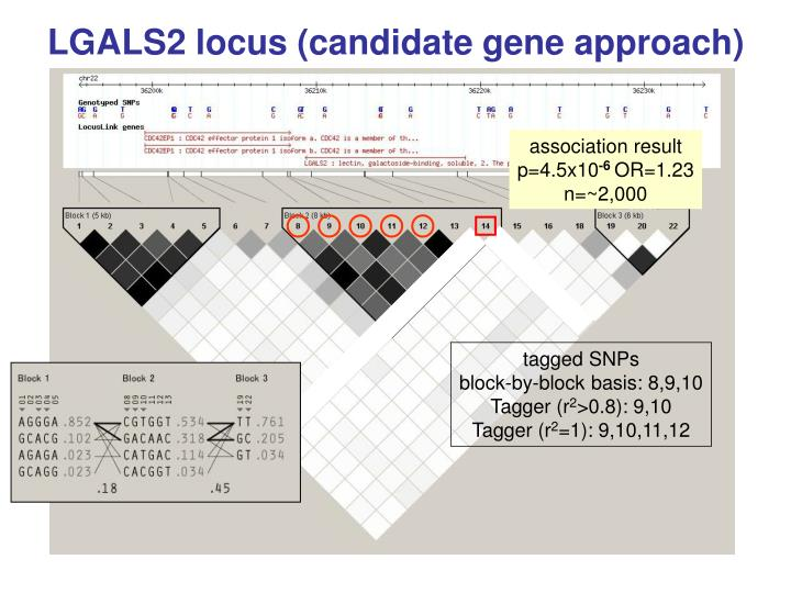 LGALS2 locus (candidate gene approach)