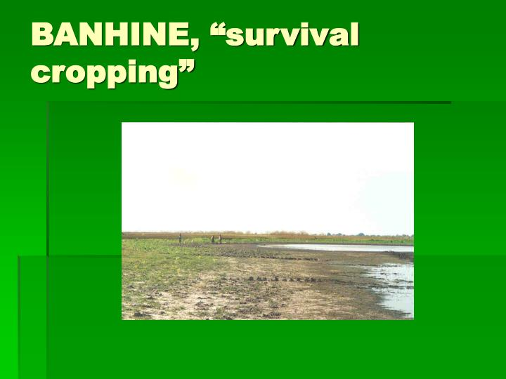 "BANHINE, ""survival cropping"""