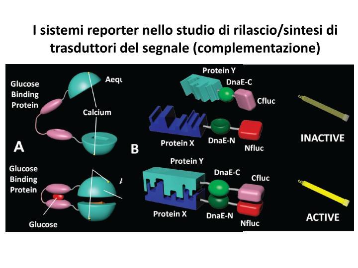 I sistemi reporter nello studio di rilascio/sintesi di trasduttori del