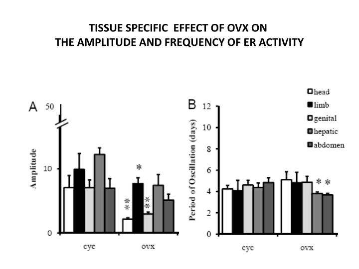 TISSUE SPECIFIC  EFFECT OF OVX ON