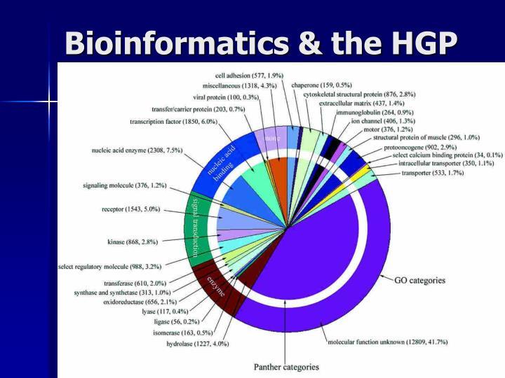 Bioinformatics & the HGP