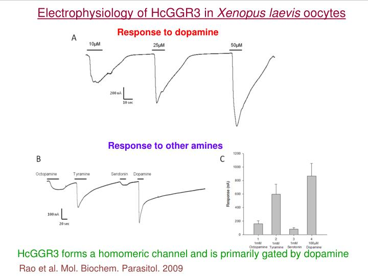 Electrophysiology of HcGGR3 in