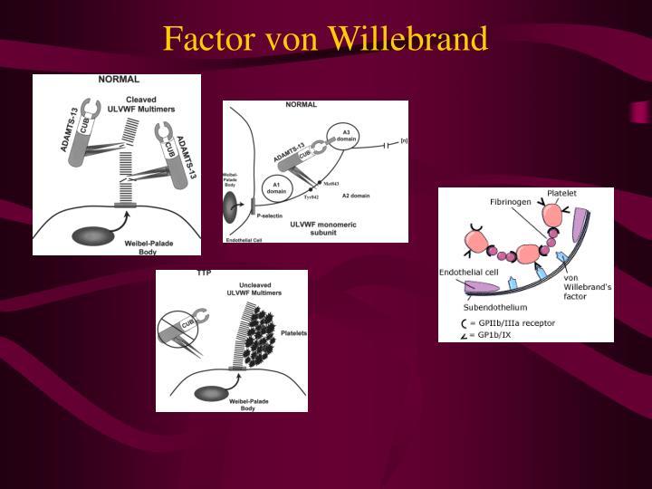 Factor von Willebrand