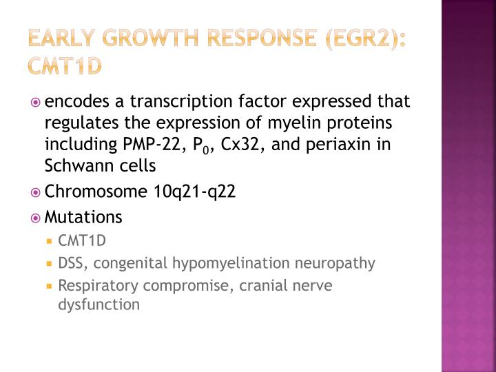 Early growth response (egr2): cmt1d