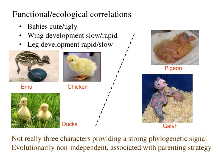 Functional/ecological correlations