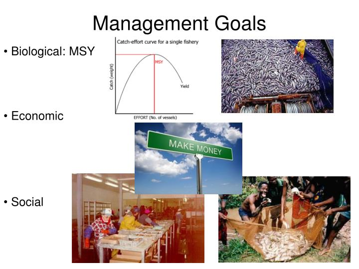 Management Goals