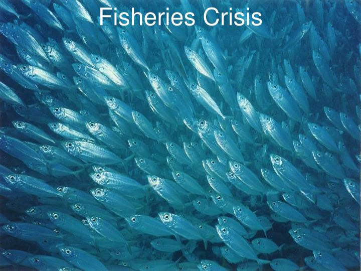 Fisheries Crisis