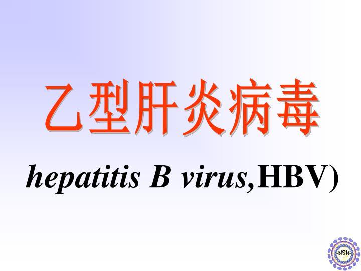 hepatitis B virus,