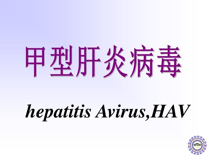 hepatitis Avirus,HAV