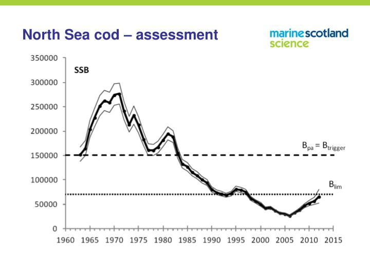 North Sea cod – assessment