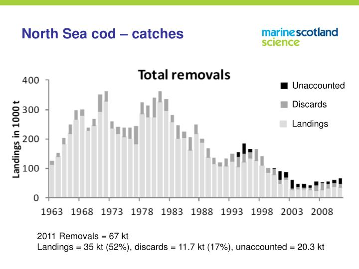 North Sea cod – catches
