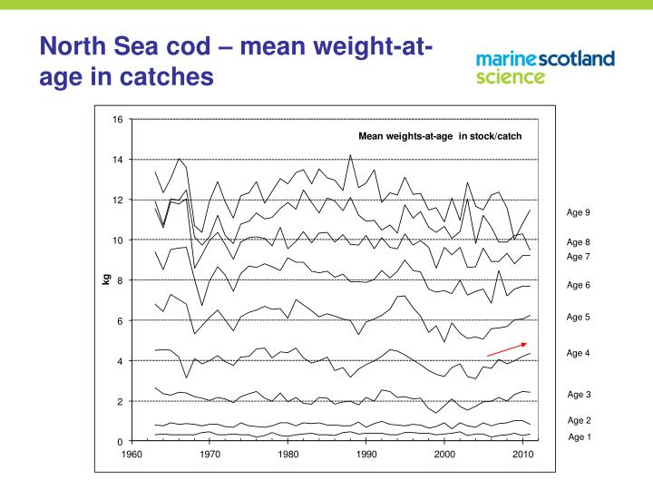 North Sea cod – mean weight-at-age in catches