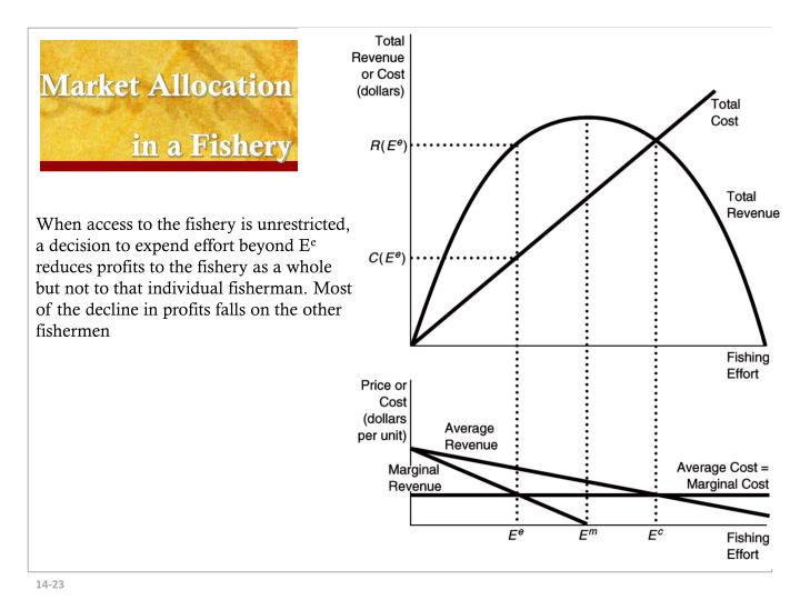 Market Allocation in a Fishery