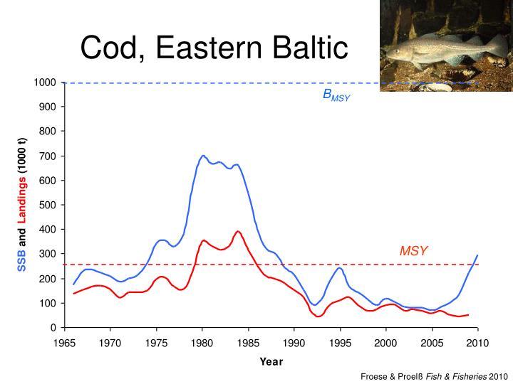 Cod, Eastern Baltic
