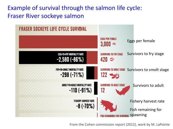 Example of survival through the salmon life cycle: Fraser River sockeye salmon