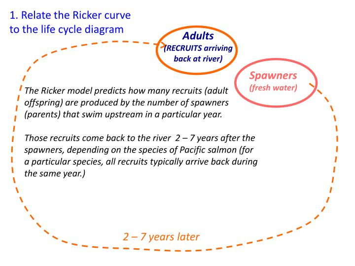 1. Relate the Ricker curve to the life cycle diagram