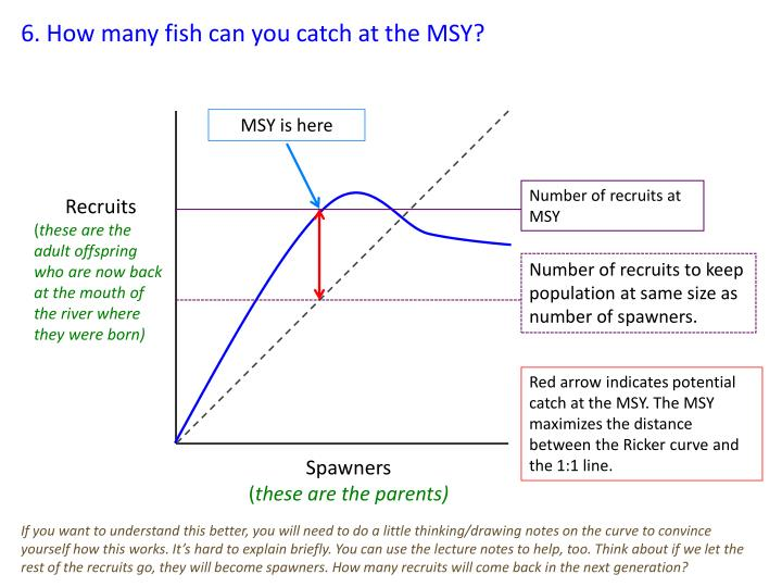 6. How many fish can you catch at the MSY?