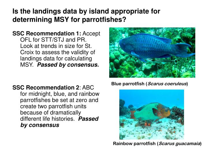 Is the landings data by island appropriate for determining MSY for parrotfishes?