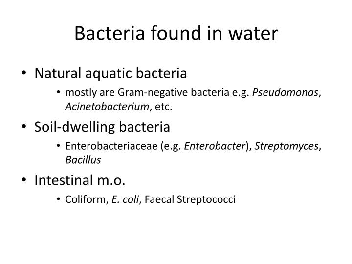 Bacteria found in water