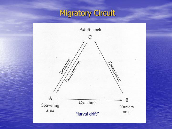 Migratory Circuit