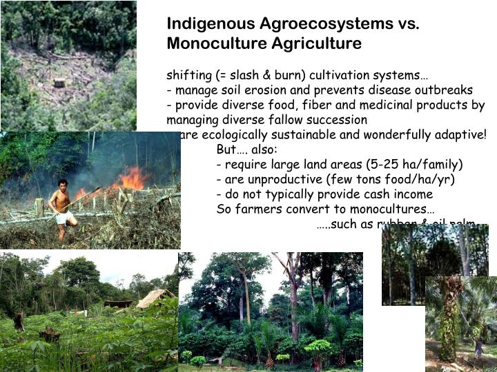 Indigenous Agroecosystems vs.  Monoculture Agriculture